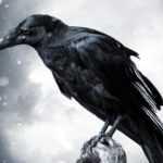 Чертог Ворона – 6 знак славянского зодиака (садиака)» Славянский садиак (зодиак, гороскоп)