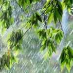 Велик день дождей. Шмини Ацерет и Симхат Тора — Тора для детей | Иудаизм и евреи на Толдот.ру